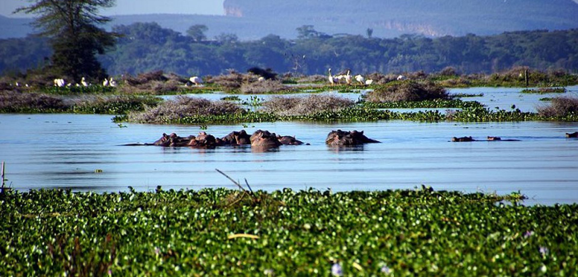 improved ecotourism in lake naivasha basin tourism essay The first management plan, initiated by the lake naivasha riparian association (lnra) in 1993, was noteworthy to introduce 'codes of conduct' for each group of lake users - flower growers, tourism operators, beef and dairy producers, urban developers, geothermal power generation.